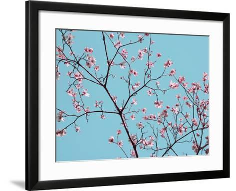 Petals & Sky IV-Sharon Chandler-Framed Art Print