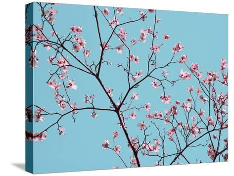 Petals & Sky IV-Sharon Chandler-Stretched Canvas Print