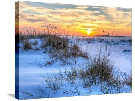 A Colorful Sunset over the Seaoats and Dunes on Fort Pickens Beach in the Gulf Islands National Sea-Colin D Young-Stretched Canvas Print