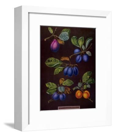Plums I-George Brookshaw-Framed Art Print