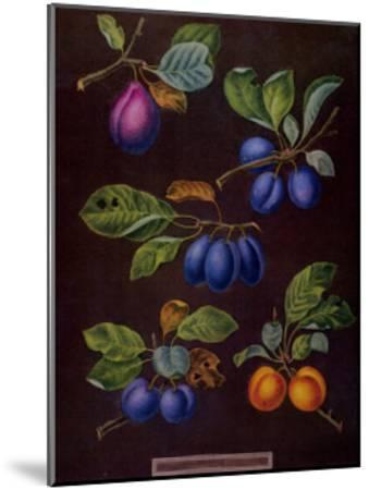 Plums I-George Brookshaw-Mounted Art Print
