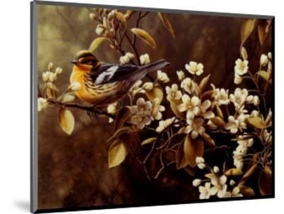 Blackburnian Warbler-Pierre Leduc-Mounted Art Print
