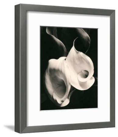 Two Callas-Imogen Cunningham-Framed Art Print