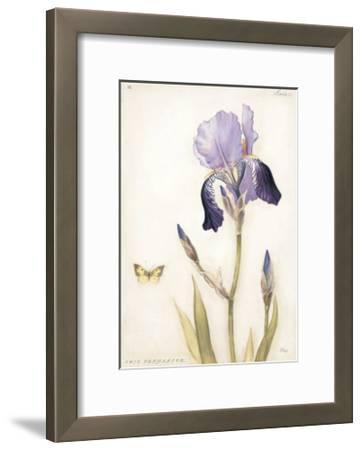 Purple Iris with Beard II-Meg Page-Framed Art Print