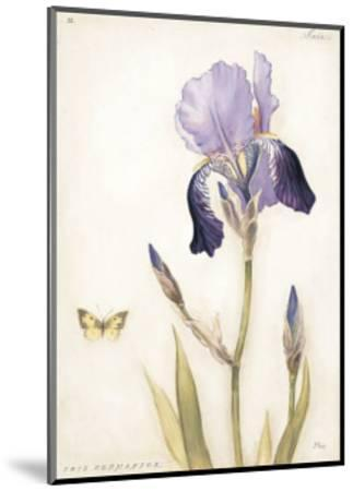 Purple Iris with Beard II-Meg Page-Mounted Art Print