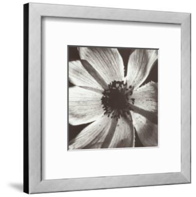 Anemone I-Graeme Harris-Framed Art Print