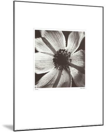 Anemone I-Graeme Harris-Mounted Art Print