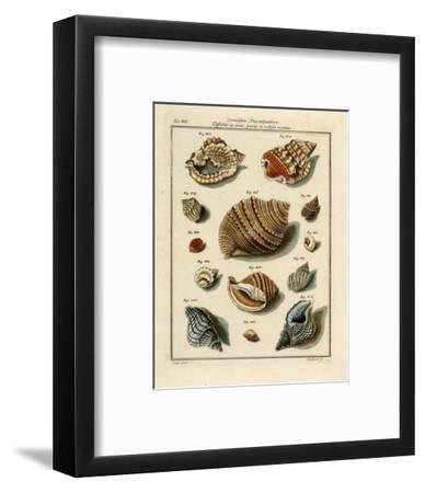 Conchylien Cabinet II-W^ Martini-Framed Art Print