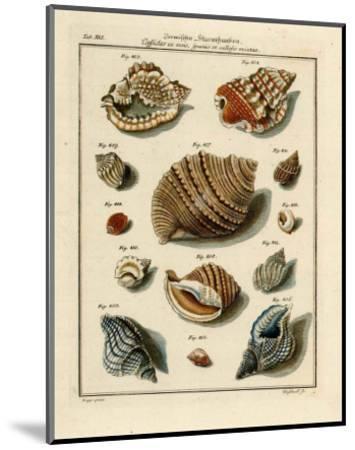 Conchylien Cabinet II-W^ Martini-Mounted Art Print