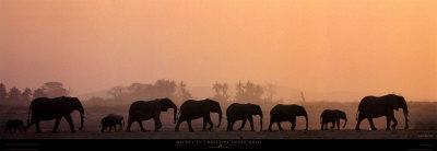 Troupeau d'Elephants-Michel & Christine Denis-Huot-Framed Art Print