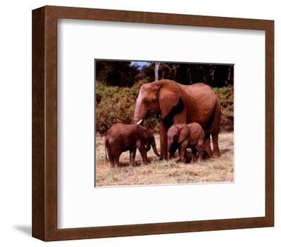 Elephants--Framed Art Print