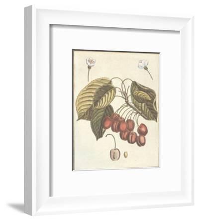 French Fruit Plate, Cherries--Framed Art Print