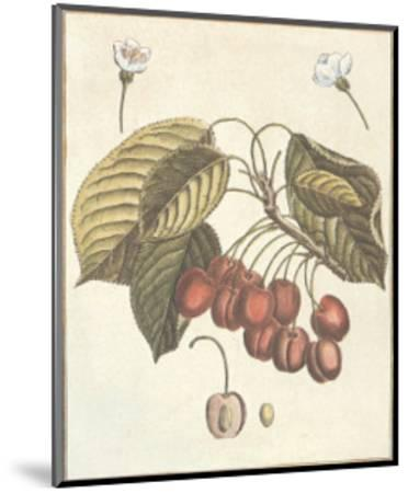 French Fruit Plate, Cherries--Mounted Art Print