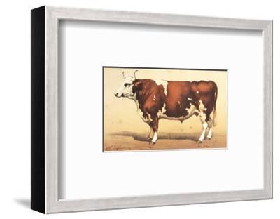 Boeuf-Comtoise--Framed Art Print