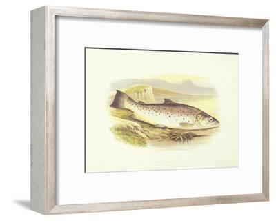Great Lake Trout--Framed Art Print