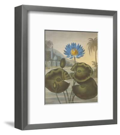 The Blue Egyptian Water-Lily-Dr^ Robert J^ Thornton-Framed Art Print