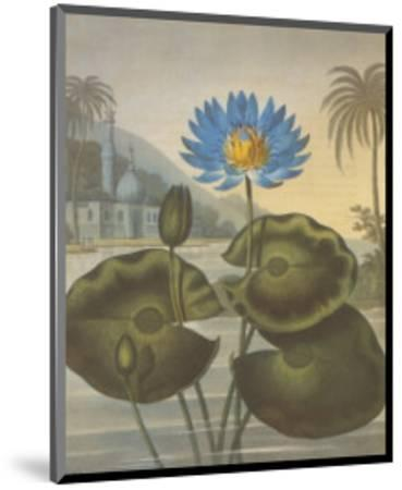 The Blue Egyptian Water-Lily-Dr^ Robert J^ Thornton-Mounted Art Print