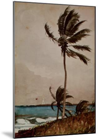 Palm Tree, Nassau-Winslow Homer-Mounted Art Print