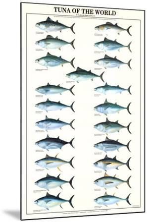 Tuna of the World--Mounted Art Print