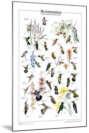 Hummingbirds of US & Canada--Mounted Art Print