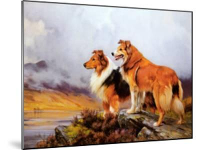 Collies in a Highland Landscape-Wright Barker-Mounted Art Print