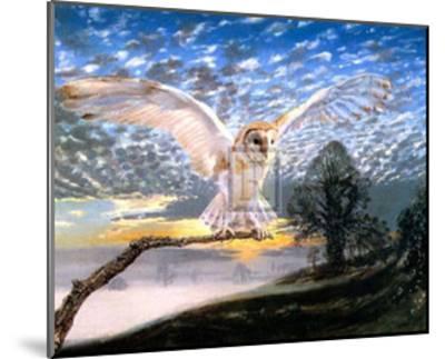 Barn Owl-J Cooksley-Mounted Art Print