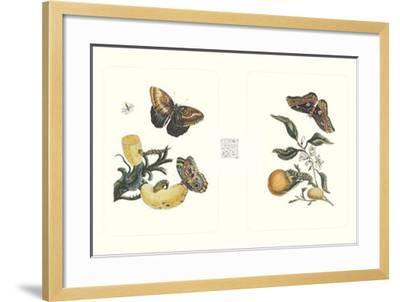 Entomology II--Framed Art Print