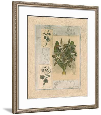 Histoire du Orchid VII-Dennis Carney-Framed Art Print