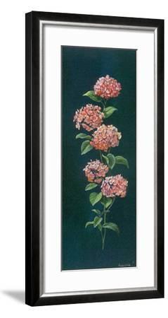 Hortensie-Karin Valk-Framed Art Print
