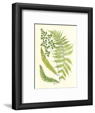 Ferns with Platemark III--Framed Art Print