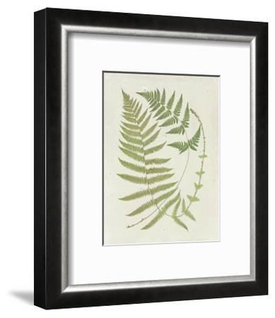 Ferns with Platemark V--Framed Art Print