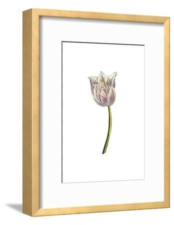 Tulip Time II--Framed Art Print