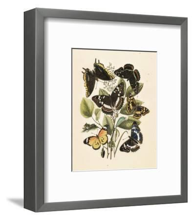 Nature's Delicate Gathering III--Framed Art Print