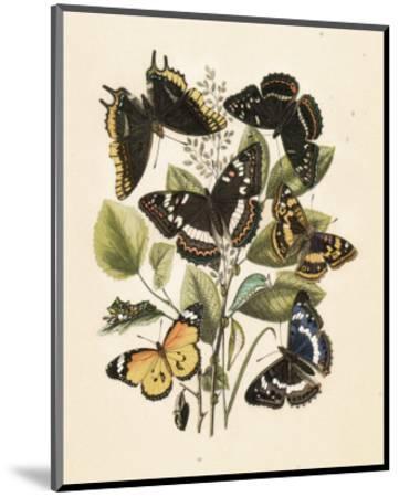 Nature's Delicate Gathering III--Mounted Art Print