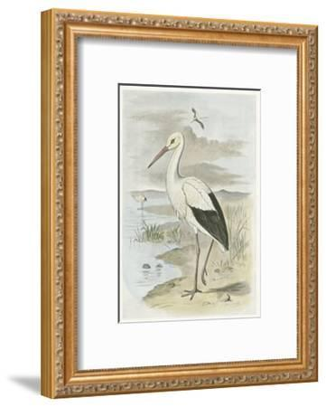 White Stork--Framed Art Print