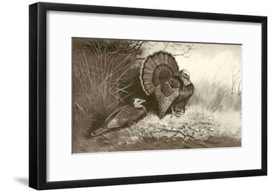 Wild Turkey-Archibald Thorburn-Framed Art Print