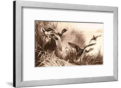Ducks-Archibald Thorburn-Framed Art Print