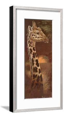 Young and Curious-Ruane Manning-Framed Art Print