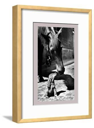 Who You Looking At ?--Framed Art Print