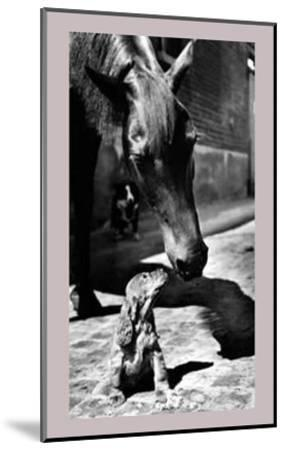 Who You Looking At ?--Mounted Art Print
