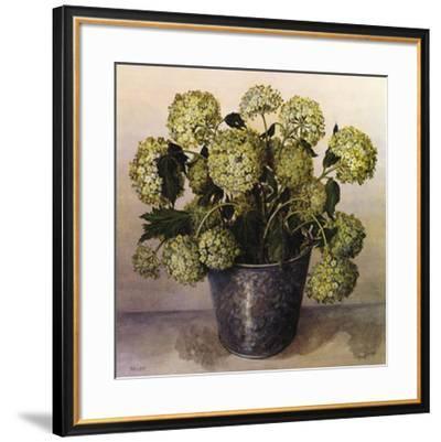 Gelder Rose in Florist Vase-Galley-Framed Art Print