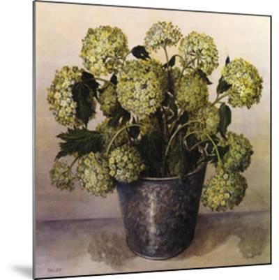 Gelder Rose in Florist Vase-Galley-Mounted Art Print