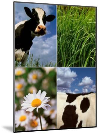 Pastoral Cow-Panais & Morcime Dumoulin-Mounted Art Print