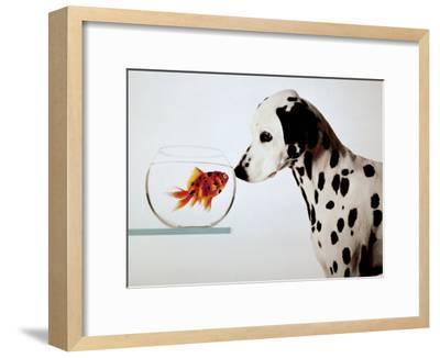 Dalmation Dog Looking at Dalmation Fish-Michel Tcherevkoff-Framed Art Print