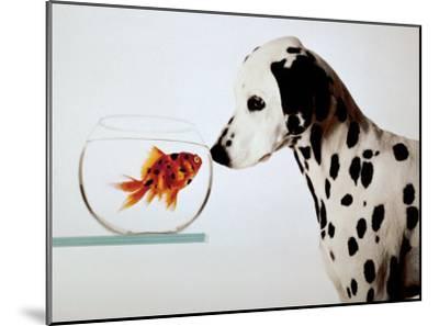 Dalmation Dog Looking at Dalmation Fish-Michel Tcherevkoff-Mounted Art Print