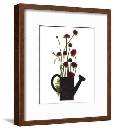 Wild Buttercups, Watering Can-Philippe Ughetto-Framed Art Print