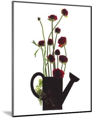 Wild Buttercups, Watering Can-Philippe Ughetto-Mounted Art Print