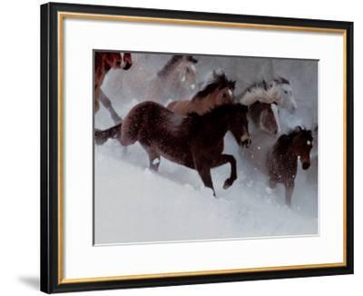 Horses in the Snow-David R^ Stoecklein-Framed Art Print