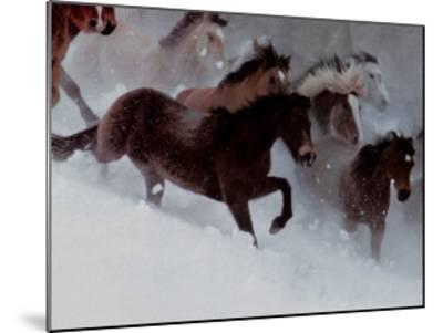 Horses in the Snow-David R^ Stoecklein-Mounted Art Print