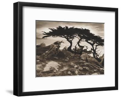 Monterey Cypress-Paul Kozal-Framed Art Print